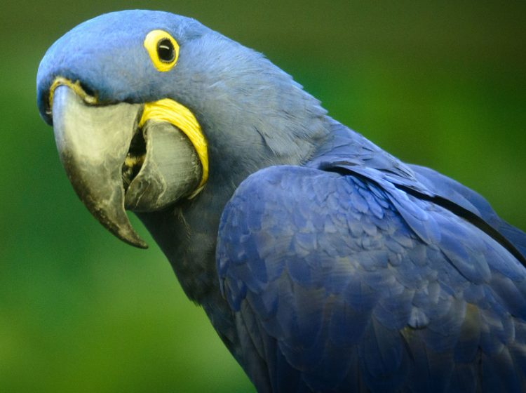 7-Things-You-Never-Knew-About-the-Exotic-Bird-Trade-and-How-You-Can-Help