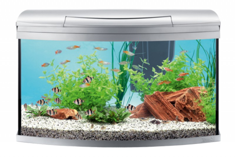 tetra aquarium aqua artii led com set anthracite 130l. Black Bedroom Furniture Sets. Home Design Ideas